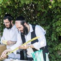 Праздник Суккот: Выбираем растения Лулав :: Aleks Ben Israel