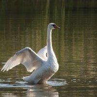 Танец на воде (1) :: Svetlana Golovanova