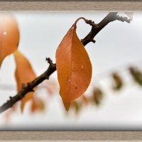 Одинокий листок. :: юрий Амосов
