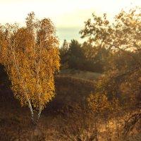 краски осени :: Юлия Маркелова