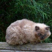 Кот с характером :: Nina Yudicheva