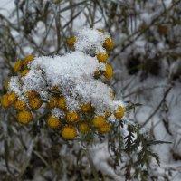 Опять зима.. :: Леонид Балатский