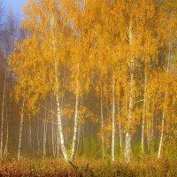 Золото и синева осеннего утра, солнце прогоняет утренний туман :: Николай Белавин