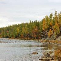 Река Енга-Ю. :: Ирина Яромина