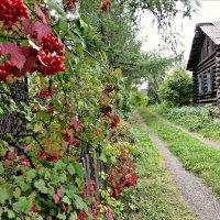 Заброшенная деревня :: Leonid Rutov