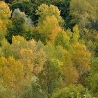 Вот и осень. :: Алексей .