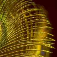 Буйство красок... :: isanit Sergey Breus