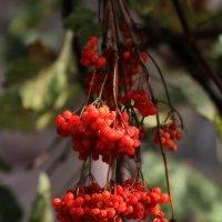 Ещё тепло, но Осень рядом... :: Валерий Басыров
