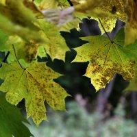 Опять Осень... :: VADIM *****