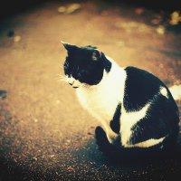Мир кошек! :: Натали Пам