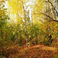 Свет золотой пролил октябрь.. :: Андрей Заломленков