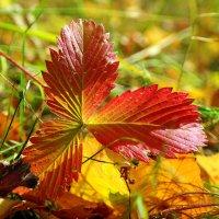 Багрянец с золотом пролились на листву.. :: Андрей Заломленков