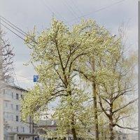 И СНОВА .... :: Юрий Ефимов