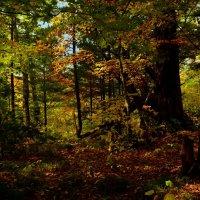 Осень в тайге. :: Сергей