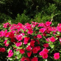 Цветущий август... :: Тамара (st.tamara)
