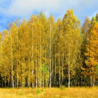 Осенний лес :: Vladimir Perminoff