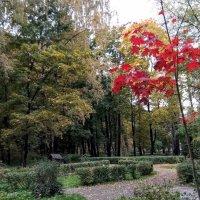 Осенние краски... :: Larisa Ereshchenko