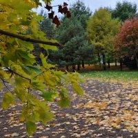 Таинственная осень, все деревья в разных нарядах. :: Татьяна Помогалова