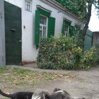 Гибридный пёс с кошачьим хвостом!... :: Алекс Аро Аро