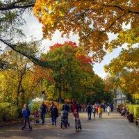 Золотая осень в Сокольниках :: Anatoley Lunov