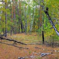 В лесу. Когда вокруг хозяйничает осень. :: Валентина ツ ღ✿ღ
