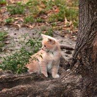 Рыжий котенок :: Олег Шендерюк