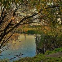 Свет Золотой осени... :: Sergey Gordoff