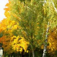 Роскошный октябрь :: Albina