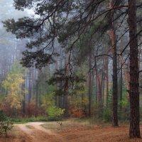 Мерцает невесомостью туман... :: Лесо-Вед (Баранов)