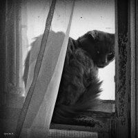 Старый кот :: Михаил Цегалко