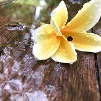 дождливый день :: Олеся Семенова