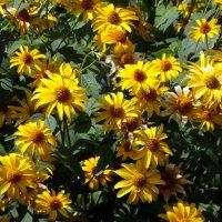 Цветы на клумбе :: Владимир Бровко