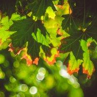 Тёплая осень :: Игорь Касьяненко