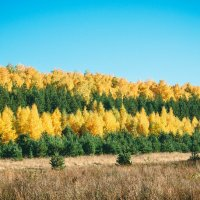 Осень :: Сергей Говорков
