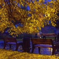 Осень землю осыпает красотой. :: Татьяна Помогалова