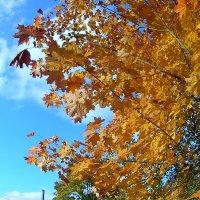 Осень золотая :: Сергей F
