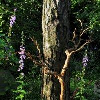 Лесной хоровод :: veilins veilins