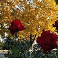 В фокусе осень. :: владимир