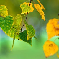 Осенний этюд. :: kvstu