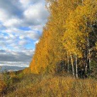 Березы желтою резьбой Блестят в лазури голубой :: Елена Якушина