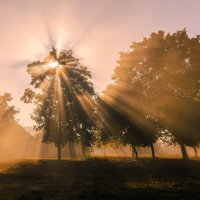 Сильный туман и яркое утреннее солнце. :: Владимир M