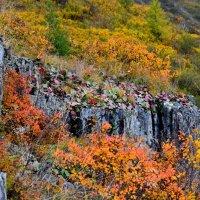 разнообразие осенних красок впечатляет! :: Татьяна Голубева