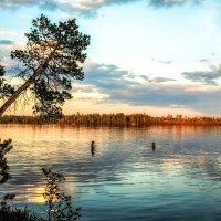 Лесное озеро :: Андрей Ковалев