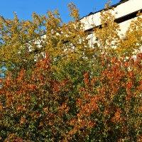 Осень во дворе :: Светлана