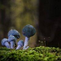Комплект сине-зеленых. :: Va-Dim ...