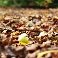 На ковре из желтых листьев... :: Елена Тимонова