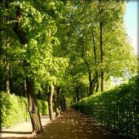 В Летнем саду :: Galina Belugina