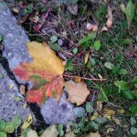 В каждом шаге осень-красота! :: Ольга Кривых