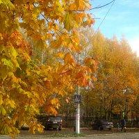 Золотая осень пришла в город :: Елена Семигина