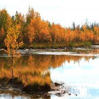 Золотая осень :: Алла ZALLA